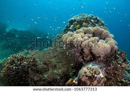 Beautiful soft corals,  wonderful hard corals and life around them. Picture was taken in the Ceram sea, Raja Ampat, West Papua, Indonesia