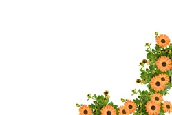 Beautiful soft orange Arctotis Flower blooming and growing with green leaves and branch in orange pot on white background isolated and clipping path, space for text, plant for flower garden concept.