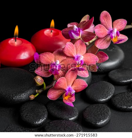 beautiful spa concept of blooming twig red orchid flower, phalaenopsis with water drops and candles on zen basalt stones, closeup
