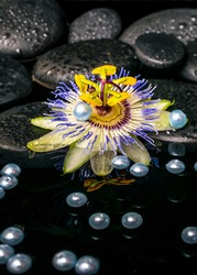 beautiful spa setting of passiflora flower on zen basalt stones with drops and pearl beads in reflection water, closeup