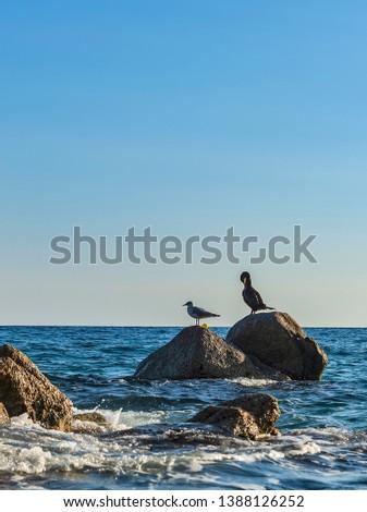 Beautiful spanish beach in Lloret de Mar, Girona, Spain, Costa Brava. Birds on stones in the sea. Seascape. #1388126252