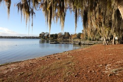 Beautiful spanish moss hanging from ancient trees, in Winter Park, Florida along the shore of Lake Virginia, near the Rollins College campus, north of Orlando.