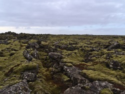 Beautiful sparse landscape with lava field with rocky fissures covered by green moss and lichens near Grindavik, Reykjanes peninsula, Iceland on cloudy winter day.