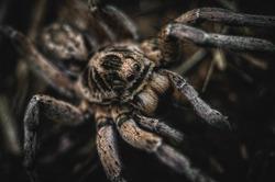 beautiful spider close up