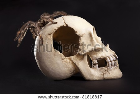 beautiful spider on the skull - stock photo
