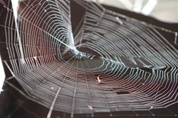 Beautiful spider web makes interesting concentric pattern with undulating colors