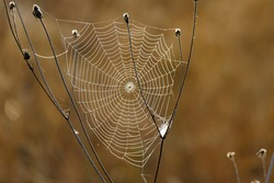 Beautiful spider web photographed at first light in the morning in the mountains of Bulgaria