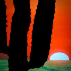 Beautiful spiky cactus in sunset sea horizon back light photography. Orange turquoise contrast. Romantic Mexico sun downer fantasy cocktail dream wallpaper. Vertical vacation theme. Travel the coast