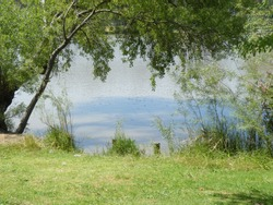 Beautiful spot on the river bank in the park. Green grass, trees and the lake water. Perfect location for picnic.