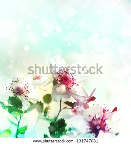 Beautiful spring background background with pink flowers and purple blurs/Spring border background with pink blossom