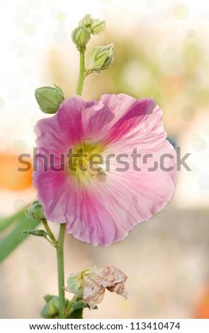 Beautiful spring background wild flower.