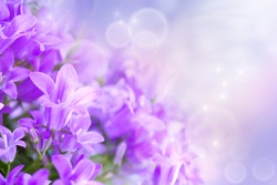 Beautiful spring background with campanula bouquet.