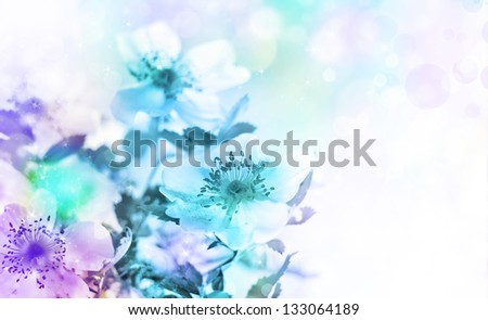 Beautiful spring background with  flowers and blur/ Spring blue flowers/ Floral background