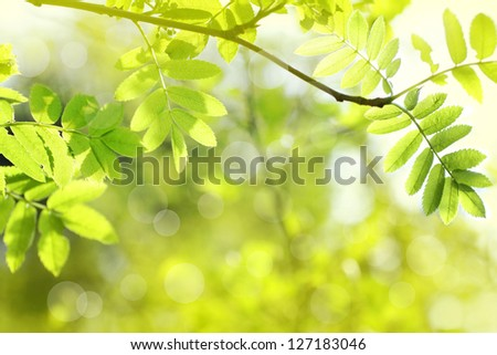 Beautiful spring background with green leaves