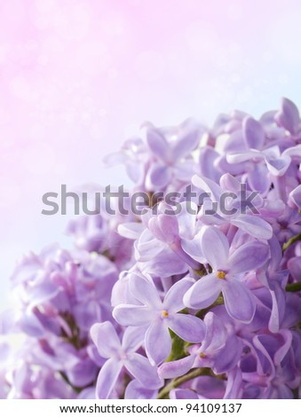 Beautiful spring background with lilac bouquet.