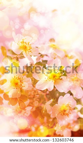 Beautiful spring background with pink flowers/Spring border background with pink blossom