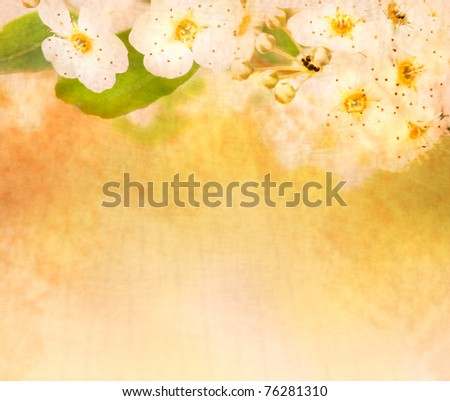 Beautiful spring blossom background with defocused lights