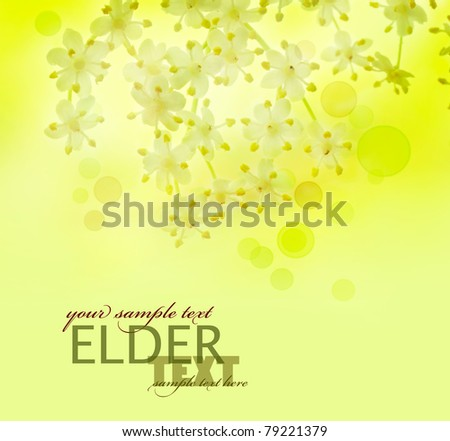 Beautiful spring blossom of elder flowers background with defocused lights