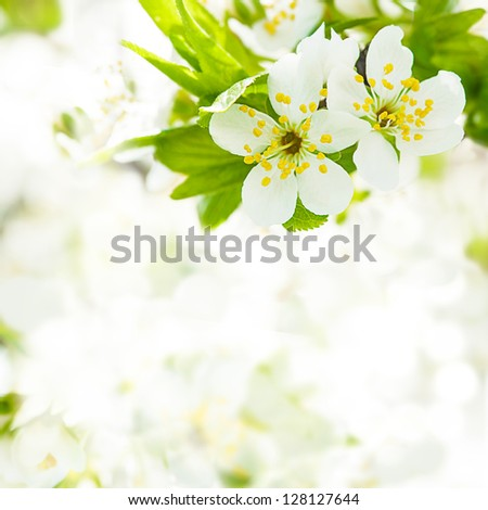 Beautiful spring bokeh for design with copyspace