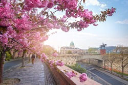Beautiful spring cityscape  with Buda Castle Royal Palace in Buda Castle district and Cherry Blossom in the foreground. View from Tóth Árpád promenad with pink blooming tree in Budapest, Hungary.