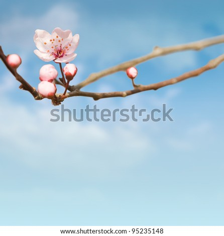 Beautiful spring composition with pink flower, buds and sky copy space.