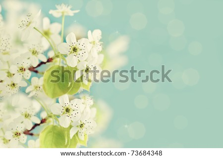 Beautiful spring crab apple tree blossoms against a blurred peaceful blue background.