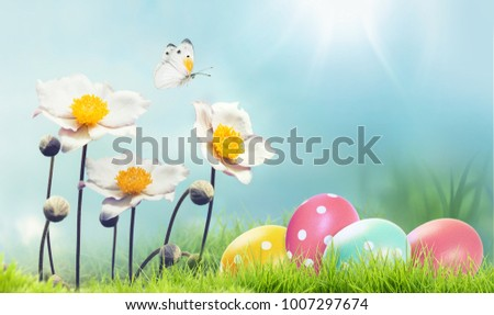 Beautiful spring easter background with copy space. White Japanese anemones, colorful Easter eggs and flying butterfly on blue sky background in spring sun on nature macro in gentle colors.