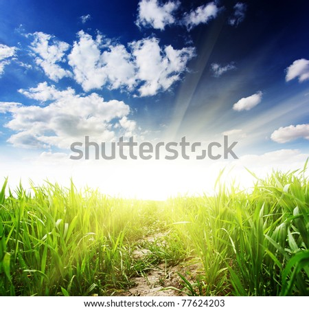 Beautiful spring field with a green grass and the beautiful sky