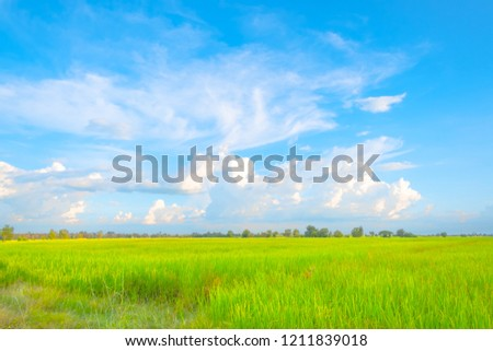 Beautiful spring field with a green grass blue sky white clouds