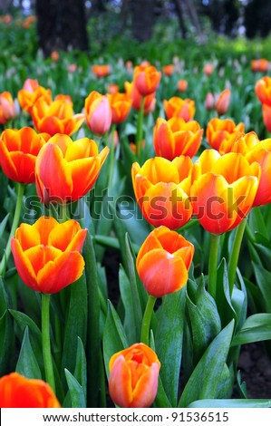 Beautiful spring flowers. - stock photo