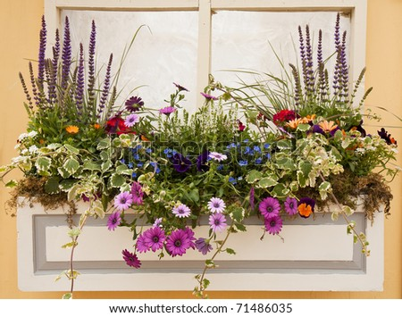 Beautiful Spring Flowers and Leaves Planter Outside a Window