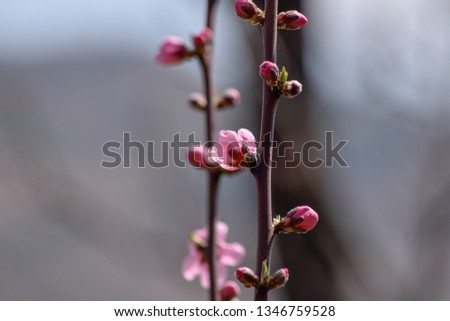 Beautiful spring flowers. creative pics of spring coloured flowers