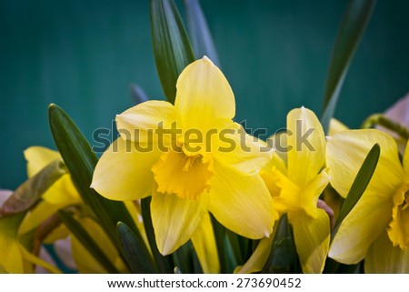 Beautiful spring flowers daffodils ez canvas beautiful spring flowers daffodils mightylinksfo