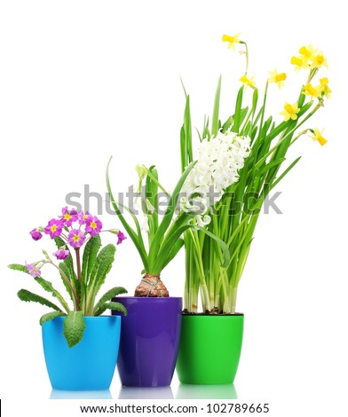 beautiful spring flowers in pots isolated on white