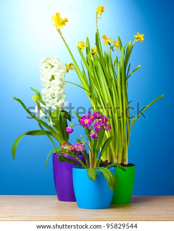 Pictures of Beautiful Flower Pots http://www.shutterstock.com/pic-95829544/stock-photo-beautiful-spring-flowers-in-pots-on-wooden-table-on-blue-background.html