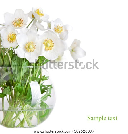 Jasmine Flower Picture on Beautiful Spring Flowers Jasmine In Vase Isolated On White Stock Photo
