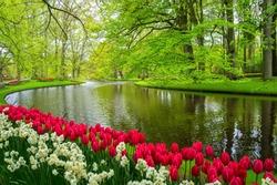 Beautiful spring flowers near pond in Keukenhof park in Netherlands (Holland)