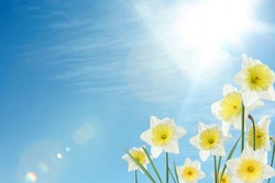 Beautiful spring flowers outdoors on sunny day, space for text