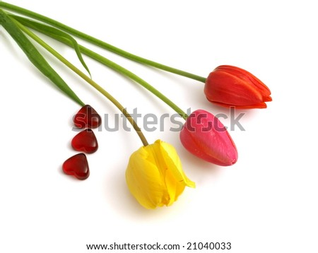 Beautiful spring flowers - tulips with red hearts on white background