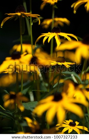 Beautiful spring flowers, yellow colored, spring scene #1007327233