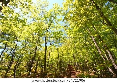 Beautiful spring foliage along the Escarpment Trail of Porcupine Mountains Wilderness State Park in Michigan