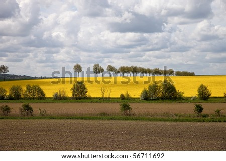 Beautiful spring landscape and rapeseed field.