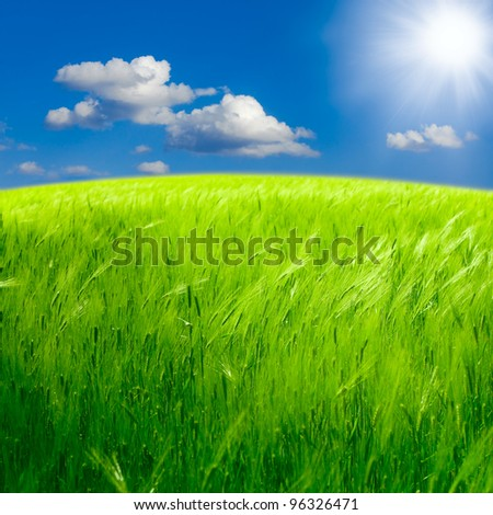 Beautiful spring landscape: Green field of rye