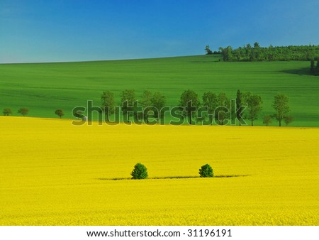 Beautiful spring landscape of three colors - yellow rapeseed, green wheat and a blue sky