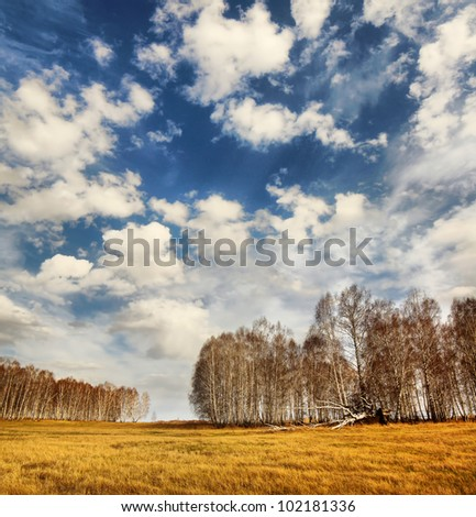 Beautiful spring landscape with birch forest