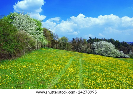 Beautiful spring landscape with blooming yellow dandelions