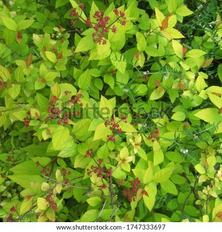 Beautiful spring leaves.Piękne wiosenne liście  Zdjęcia stock ©