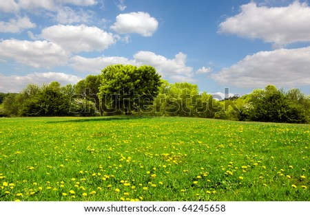 Beautiful spring meadow #64245658