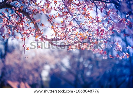 Beautiful spring nature background. Inspirational and calmness concept and beauty in nature