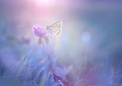 Beautiful spring pattern background with white butterfly and flowers anemones macro on nature. Delicate elegant dreamy airy artistic image nature,  spring wallpaper.